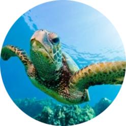 Scuba diving st george utah the best scuba diving utah shop for Affordable pools st george utah